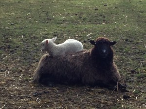 'Mum makes the best bed!'